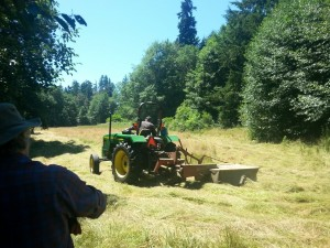 Roger Hodgkins cutting the hay